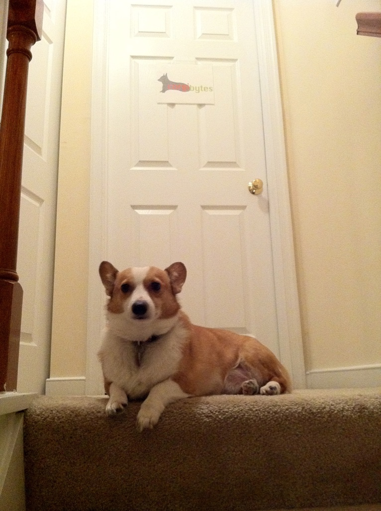 Corgi dog sitting at top of staircase with a door in the background with the Corgibytes logo on it